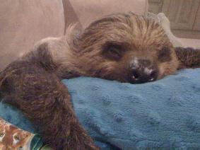 me, 'occupy sofa' day